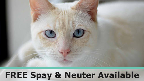 Free Spay or Neuter