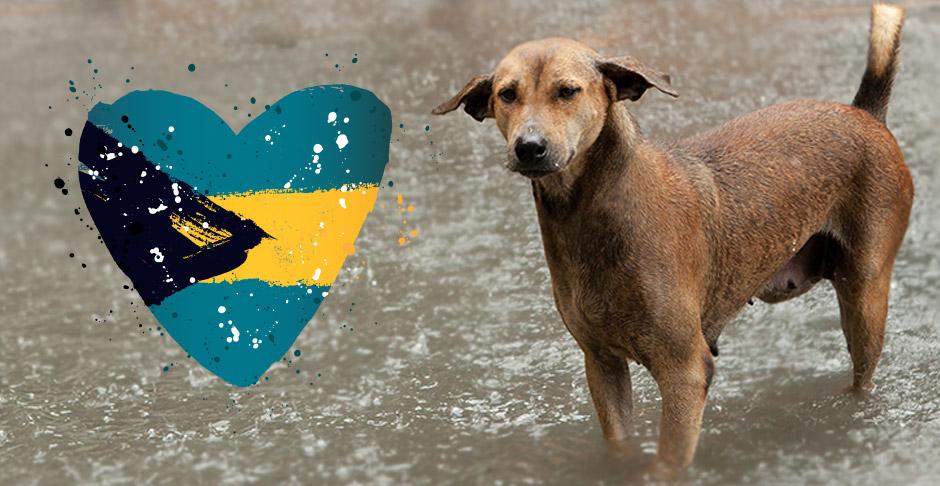 Hurricane Dorian: Updates | Peggy Adams Animal Rescue League