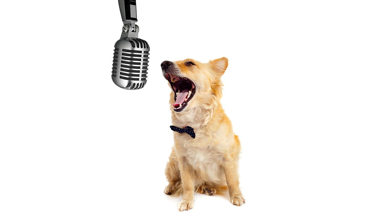 Dog on Radio