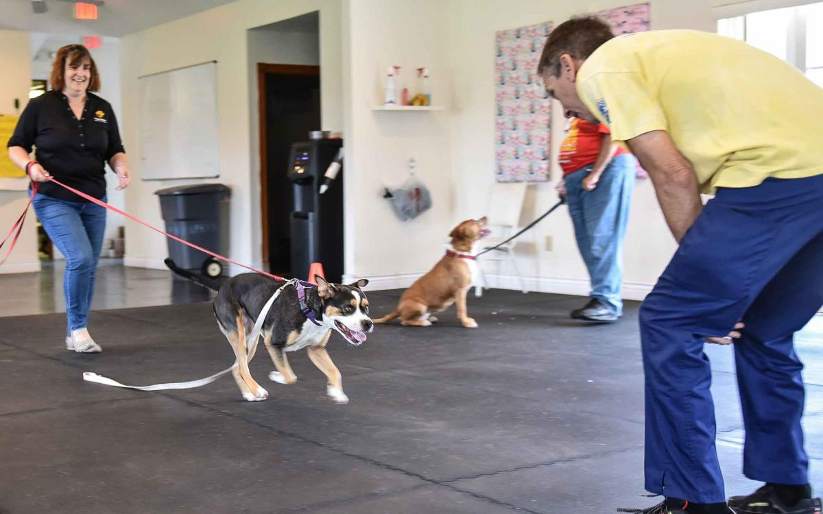 Video: Good Dog Training Program