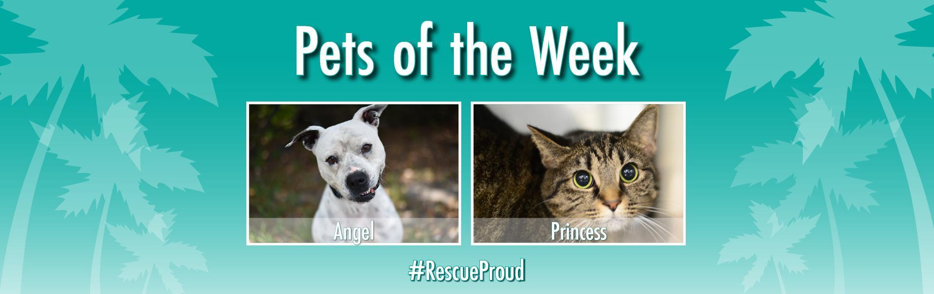 Peggy Adams Animal Rescue League | Home