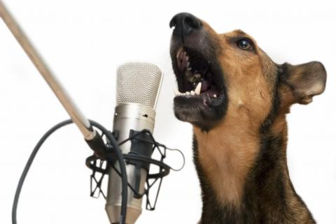 Dog with Microphone